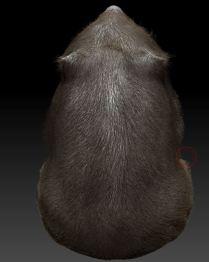 wombat11 - Copy