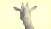 Giraffe_A_